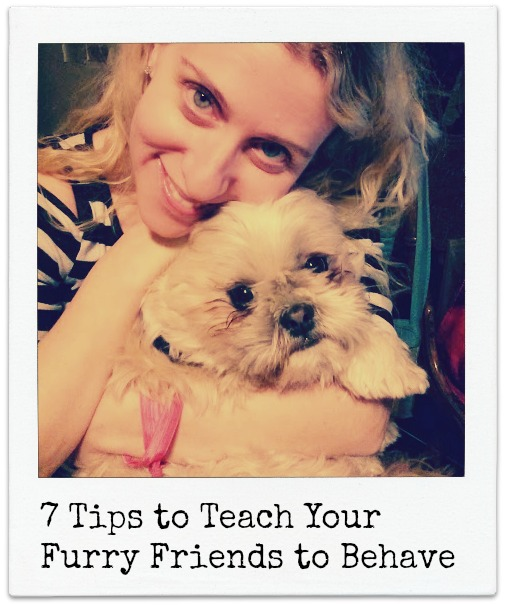 7 Tips to Teach Your Furry Friends to Behave