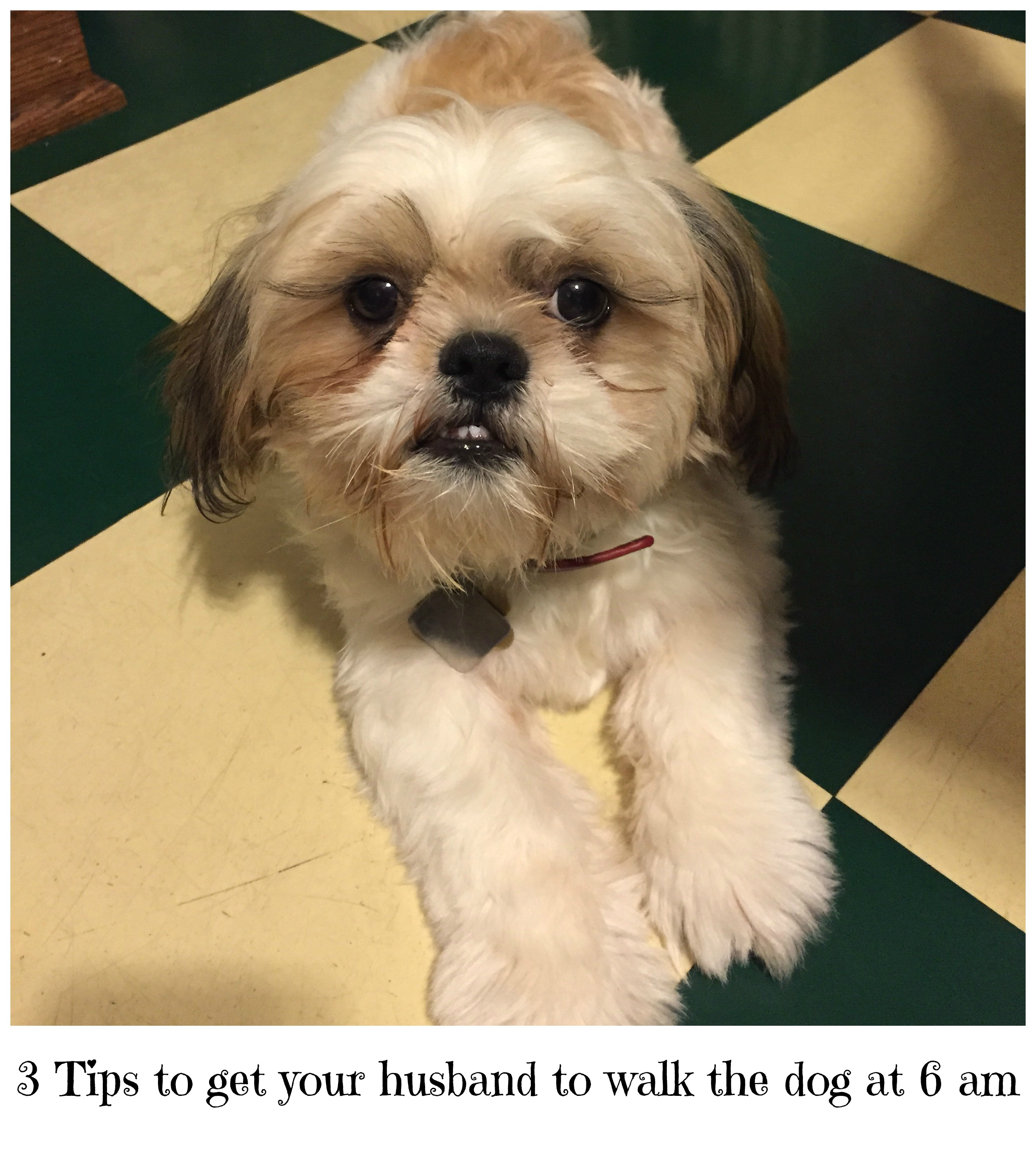 3 Tips to get your husband to walk the dog at 6 am