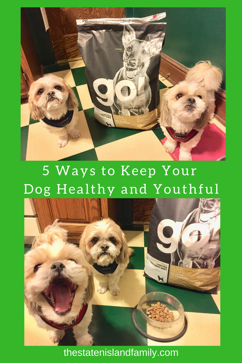 Five Ways to Keep Your Dog Healthy and Youthful